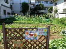 河野エコ丸が行く 東京eco探しの旅-自家菜園