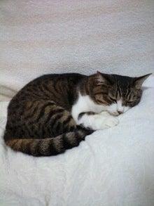 ずれずれブログ…湘南で猫と暮らせば…-110822_0833~0001.jpg