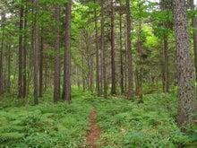 $歩き人ふみの徒歩世界旅行 日本・台湾編-アカエゾの森