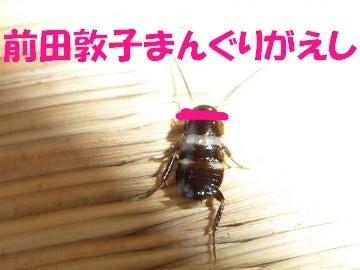 ハルKARAの量産型お尻AKBテポドン夢日記-ゴキブリ卵画像前田敦子修正前ポロリ