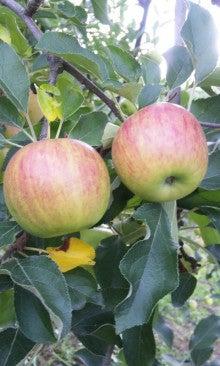 りんごと共に生きるギャル☆ヒトミのブログ-110822_1647~01.jpg