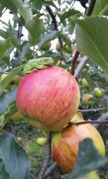 りんごと共に生きるギャル☆ヒトミのブログ-110822_1535~01.jpg