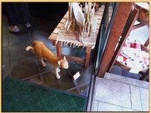 Kirin's Cafe  Style  /  カフェ・雑貨・グルメ & 街歩き-谷中の街角3
