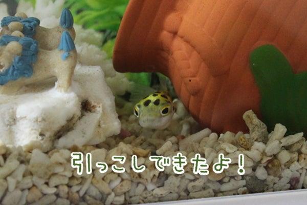 ヒッコシタヨ( `・д・´)キリッ