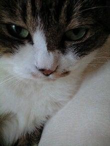 ずれずれブログ…湘南で猫と暮らせば…-110828_1120~0001.jpg