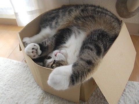 猫ログ-やっぱり段ボールが好き