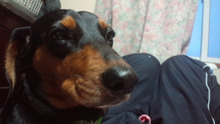 鬱と犬-CA3F07290001.jpg