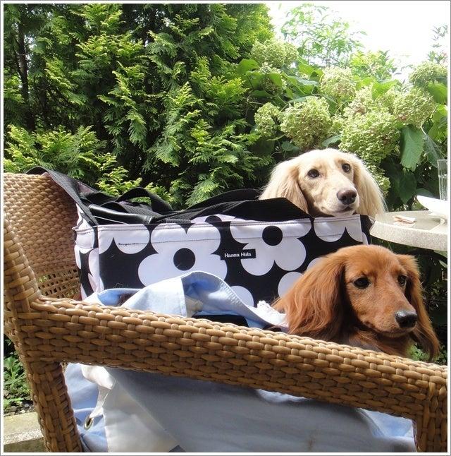 旅犬Lani&Leaのほほん風船記-しらさぎ邸