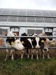 北海道便り・大きくて優しい牛たちとの生活-110830_0558~02.jpg