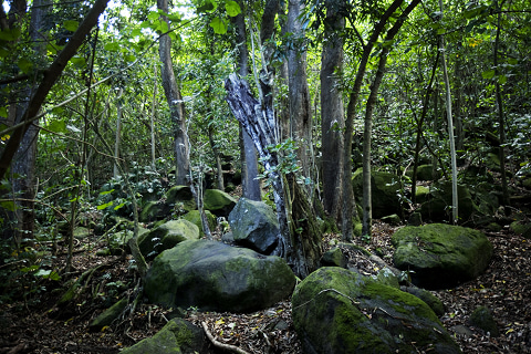 ハワイ発 魂のエステ  神様タッチ ロミロミ ハワイアンマナ☆光溢れる島より愛をこめて