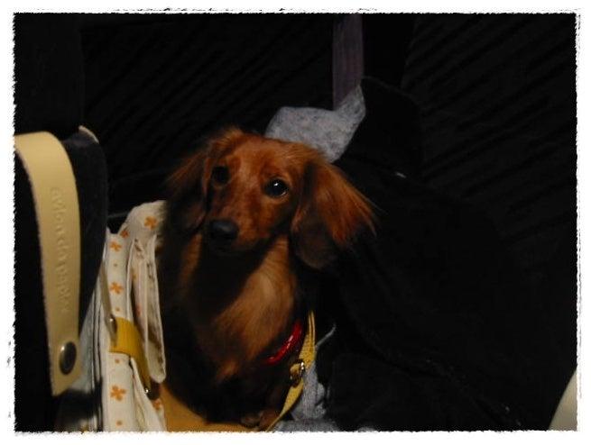 旅犬Lani&Leaのほほん風船記-二期倶楽部