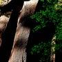 奈良 ~赤目48滝~