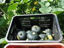 はくの 北海道で農業はじめましたブログ