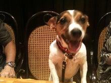 犬同伴レストラン白川亭のわくわくブログ-福助ちゃん