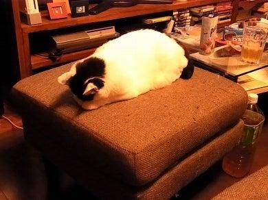 猫バカ日記