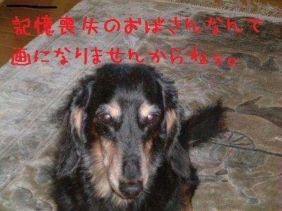 ♪絵本屋と長寿犬サーブ