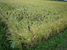 $伊賀米農家のブログ