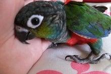 $フクロウと 鳥・ラブバードと 小さい動物  ~  KAKOの森 ~