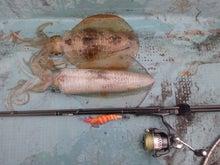 shinokeiの釣りボケ日誌