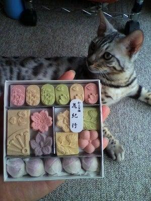 $とある団体職員と猫の生活