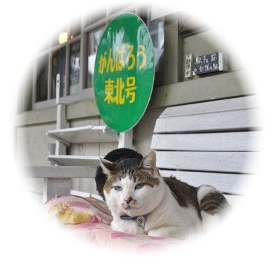 駅長猫コトラの独り言~旧 片上鉄道 吉ヶ原駅勤務~-kotora