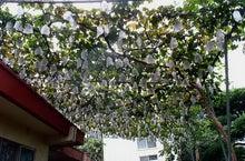 大岱の果樹園 東世園のブログ
