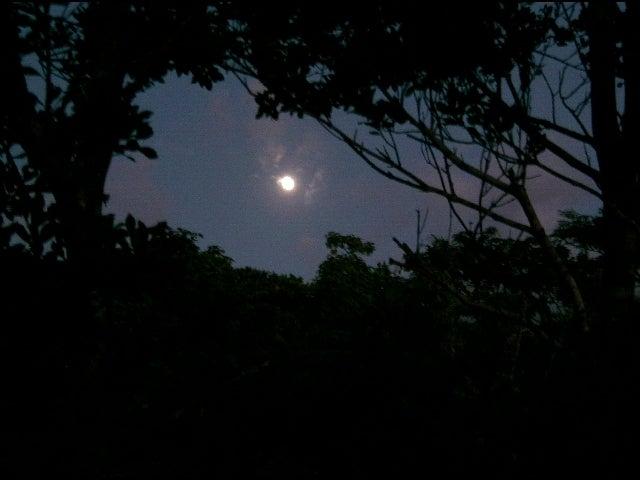 神夢里の月