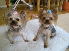 北斗の犬-2011091213490000.jpg