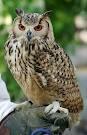 $フクロウ(猛禽) と 鳥・ラブバードと 小さな動物~  KAKO &Amethyst  Star の森 ~
