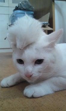 気がつけば、猫がいっぱい-110831_0756~01.jpg