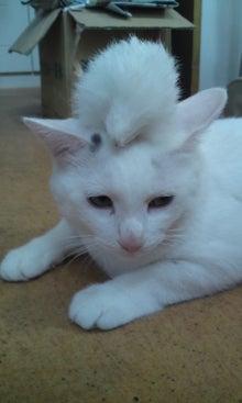 気がつけば、猫がいっぱい-110831_0755~01.jpg