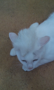 気がつけば、猫がいっぱい-110831_0755~02.jpg