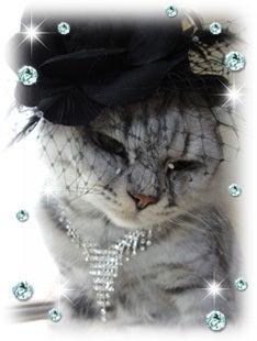 $キャバレー「猫~JEALOUSY」