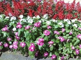都庁前の花壇