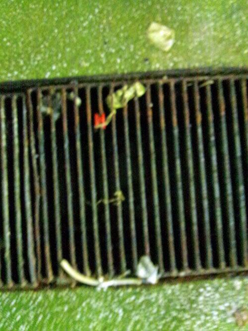 害虫・害獣から街を守るPCOの調査日記-食品残渣3