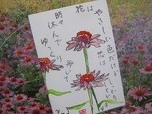 絵手紙あそび-エキナセア0916
