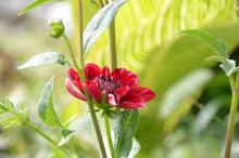 季節の植物と猫話