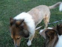 犬と私の日々の暮らし