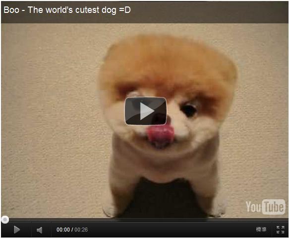 これぞブサかわ☆世界一有名なポメラニアンBoo![番外編の犬動画