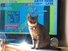 きじとらのブログ-NEC_0516.jpg