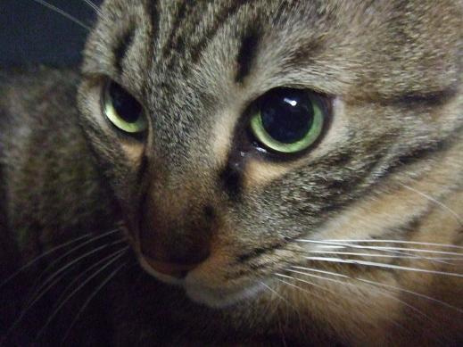ネコに真珠・豚にゴハン-ほんとにぃ?