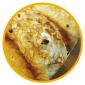 $金沢のおいしいパン【Su Franche】スーフランシュ-クルミとレーズンの食パン