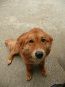 東北動物レスキュー 長崎の保健所の命を救う会の代表のブログ-トトロ