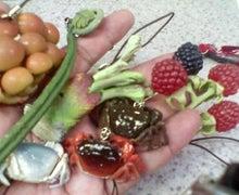腐ってやがる・・・ぷログ-山菜の和み