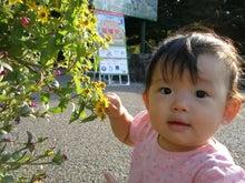 理想家庭から世界平和を目指して-はじめて花