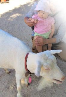 理想家庭から世界平和を目指して-はじめて山羊