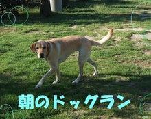 La Coda Happy Days-ドッグラン朝