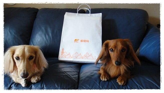 旅犬Lani&Leaのほほん風船記-ありがとう