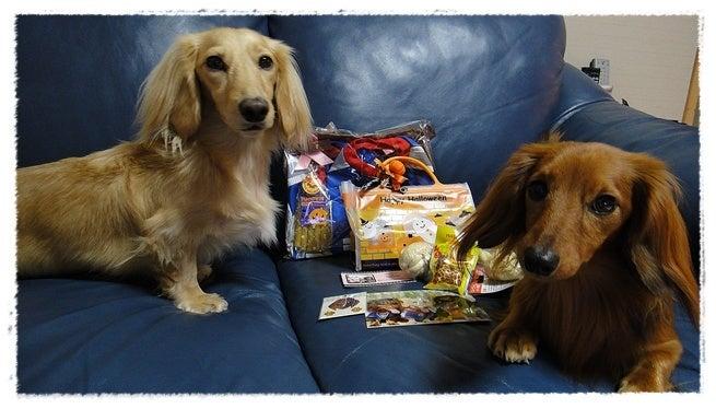 旅犬Lani&Leaのほほん風船記-ヴィトエルパパ❤ありがとう