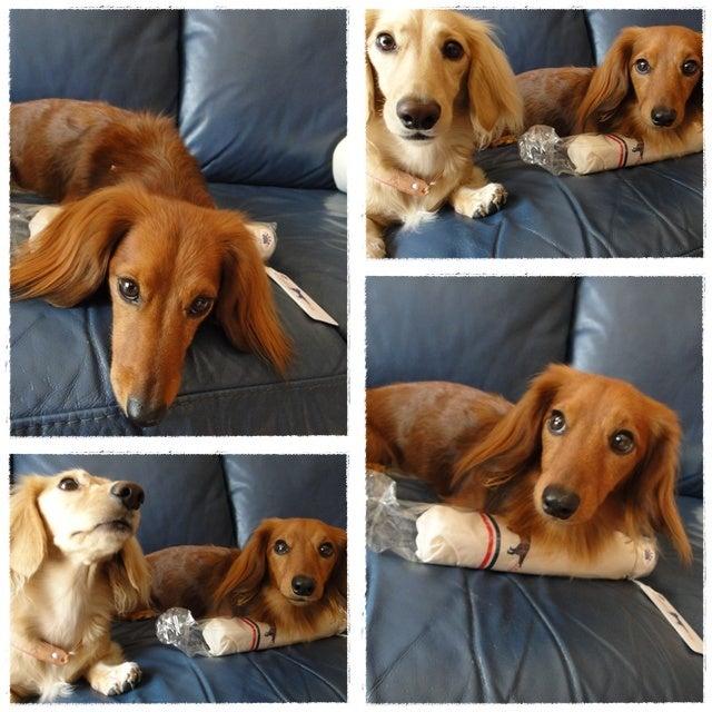 旅犬Lani&Leaのほほん風船記-るーさん❤ありがとう